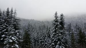 Snowy Peaks of Mount Hemlock